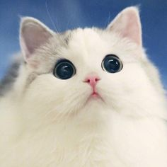 Cats Wallpapers ✧ Cute Little Kittens, Cute Baby Cats, Cute Funny Animals, Cute Baby Animals, Kittens Cutest, Cute Dogs, Beautiful Kittens, Pretty Cats, Animals Beautiful
