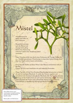 Mistel http://www.kraeuter-verzeichnis.de/