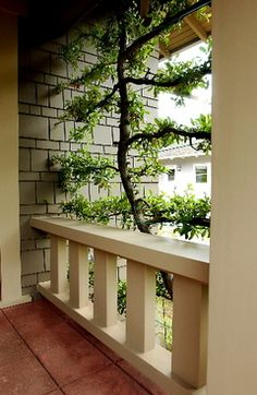 An espaliered fruit tree makes good use of limited space.