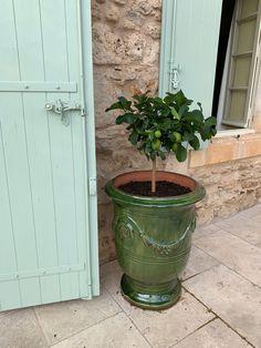 Lemon tree in Anduze pot