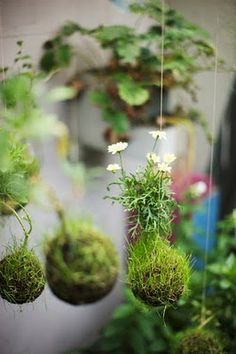 little pieces of green // kokedama