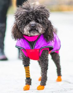 BEST WORKOUT GEAR - New York City's Best-Dressed Dogs of the Year