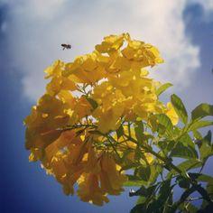 Esta es la Semana de los Polinizadores. Las abejas y otros polarizadores son vitales para la producción de alimentos. Foto José E. Maldonado / www.miprv.com