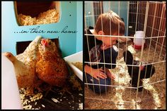 Small Potatoes for Childhood 101 - raising bantam hens