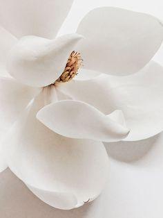 39 trendy flowers photography close up pictures Flower Aesthetic, White Aesthetic, White Flowers, Beautiful Flowers, White Peonies, Flowers Nature, Motif Art Deco, Magnolia Flower, Grafik Design