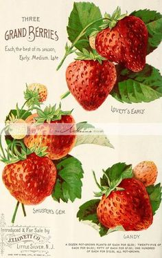 Printable Digital Download Strawberries by TheArtisansShoppe