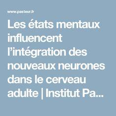 Les états mentaux influencent l'intégration des nouveaux neurones dans le cerveau adulte | Institut Pasteur