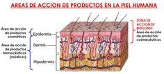 KON MAS SALUD (SALUD & BELLEZA): LA PIEL PROPIEDADES - PROBLEMAS Y SOLUCIONES El Se...