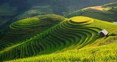 Circle terraces field by Wanasapong Jaiinpol on 500px