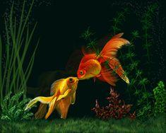 Goldfish Pond, Aqua Culture, Types Of Fish, Fish Ponds, Beautiful Fish, Exotic Fish, Colorful Fish, Shade Plants, Fish Art