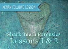 45 best teaching geologic history images on pinterest earth the shark teeth forensics project examining fossil shark teeth tells us a great deal about the fandeluxe Image collections