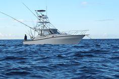 Ascension Island Blue Marlin Big Game Fishing