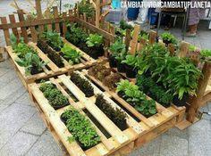 Plantering i lastpallar