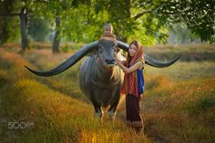 Touch Big Buffalo - The buffalo long horn and thai girl is very baeutiful light and blackground at Masarakam Thailand