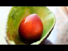 beneficios de la semilla aguacate y como se usa - YouTube