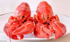 Scientist: Baby lobster count drops off US coast, Canada University Of Maine, Drop Off, Canada, Counting, Coast, Lobsters, Baby, School, Places
