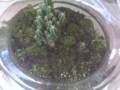 1st terrarium,not bad at all