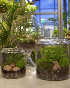 DIY TERRARIUMS / DIY Fairyland Terrarium - CotCozy