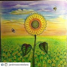 Instagram media desenhoscolorir - #Repost @jardimsecretofans with @repostapp ・・・ Como eu amo a criatividade dos jardineiros nessa página de girassóis... Parabéns pelo capricho @m_f_t_m_m Envie sua foto pra nós!! Marque o ig ou use a hashtag #desenhoscolorir #jardimsecreto #secretgarden #johannabasford #jardimcolorido