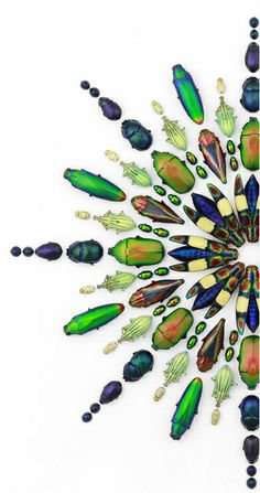 This beautiful bug art is created by Christopher Marley of Salem, Oregon-Buy from his site. - But doesn't his art inspire quillers to quill bugs?
