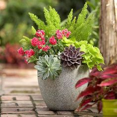 Love this container mix with succulents and asparagus fern.  These plants are also low maintenance too.