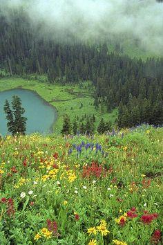 Wildflowers, Mt. Sneffels Wilderness, Colorado by Robert Crum, via Flickr