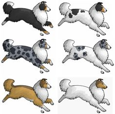 Rough Collies. I have alomost every color. Hehehe.