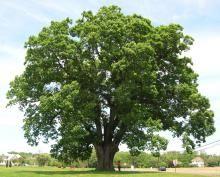 δέντρο, ονειροκρίτης, ξεραμένο δέντρο, πράσινο δέντρο