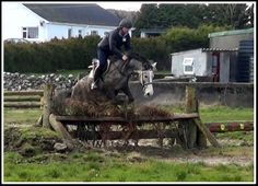 Seamus 2009 ISH gelding for sale. coopershilllivery@gmail.com