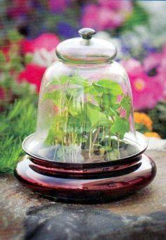 Victorian Bell Cloche - Gardening Under Glass