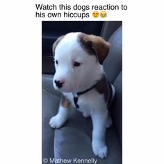 Cute Funny Dogs, Cute Funny Animals, Funny Dog Faces, Cute Animal Videos, Cute Animal Pictures, Funny Animal Photos, Dog Pictures, Funny Animal Jokes, Funny Puppy Memes