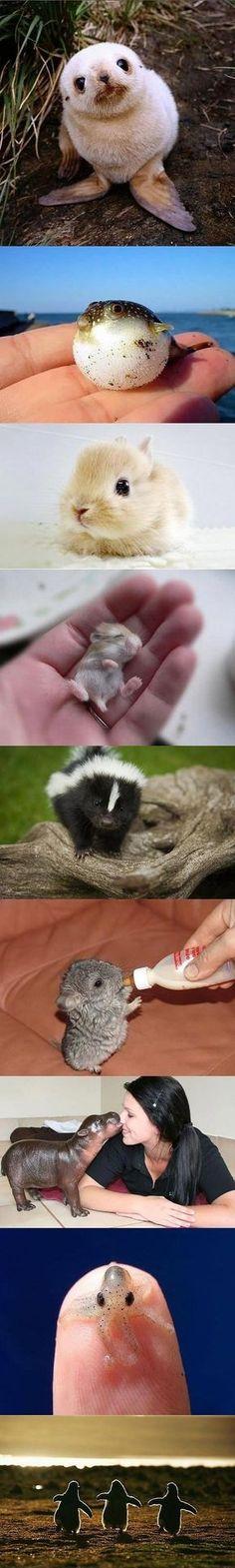 Animais fofinhos