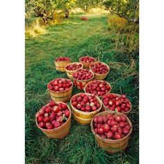 Apple tree ❤ liked on Polyvore featuring home and home decor