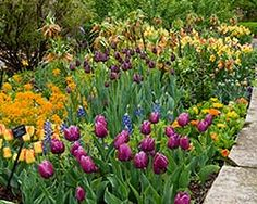 How to remember where bulbs are planted