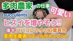 【多肉植物】可愛いヒスイを増やそ~🎶ぽろぽろ~🎶 - YouTube Succulent Care, Succulents, Youtube, Succulent Plants, Youtubers, Youtube Movies