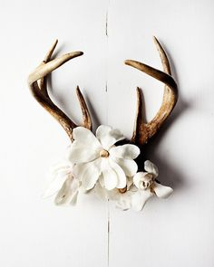 lovely white flowers with deer antlers hanging on the wall..