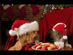 Christmas coming up again - Arno Argos & Norbert Zehm!     Marry Christmas! Happy New year! Funny animals with Christmas tree.  С Рождеством и Новым годом!