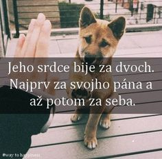 Jokes Quotes, Dog Quotes, I Love Dogs, Cute Dogs, Animals And Pets, Cute Animals, English Words, True Words, Motto