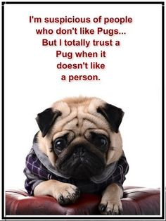 Pugs are excellent judges of character-unless they're my neurotic dogs that bark at everyone
