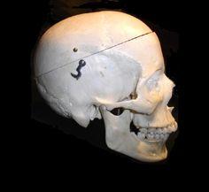 Human Skull, Skulls, Bones, Skeletons, Dice, Legs