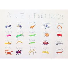 A to Z of Edible Insects, Illustration by Rosie Chomet
