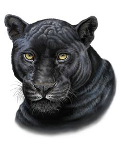 Black Panther Painting-Print by IllustrationsByAmy on Etsy Black Panther Drawing, Black Panther Face, Black Panther Tattoo, Panther Cat, Panther Print, Black Panthers, Tattoo Pantera, Big Cat Tattoo, Easy Animal Drawings