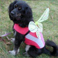 http://www.condoblues.com/2015/10/make-dog-fairy-halloween-costume.html