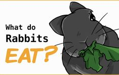 What is a healthy rabbit diet? rabbits should eat mainly hay and fresh greens. Only give a small amount of pellets, and treats should be given sparingly. Rabbit Diet, Rabbit Eating, Rabbit Food, Pet Rabbit, Rabbit Litter, Lionhead Rabbit, Pet Bunny Rabbits, Baby Bunnies, Homemade Rabbit Treats
