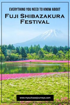 Fuji Shibazakura Festival// From  My Suitcase Journeys