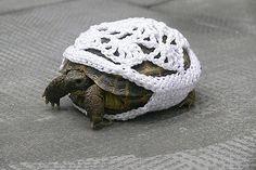 turtle sweater!