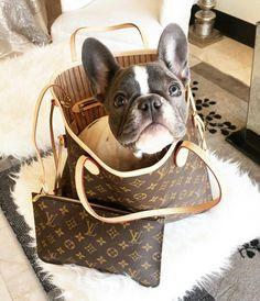 """Good morning"", Winnie the Blueee, the French Bulldog, @winnie_the_blueee"