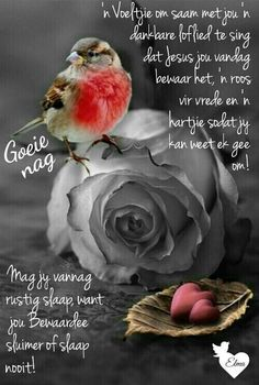 Good Night Blessings, Morning Blessings, Good Morning Wishes, Day Wishes, Lekker Dag, Evening Greetings, Afrikaanse Quotes, Goeie Nag, Goeie More