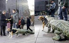 AWESOME Dog Costume !!!