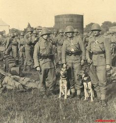 Polish soldiers and war dogs - pin by Paolo Marzioli